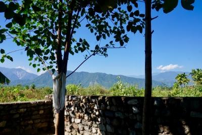 I klostrets trädgård gods ett träd som odlats från ett frö från ett träd där Buddha gärna satt och kontemplerade..