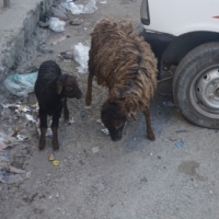 Indien och Bhutan 2016