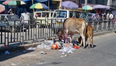 I Jaigaon används gatans mittremsa som sopstation. Kor med muterade magar gillar läget.